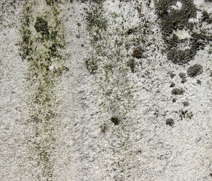 Mold Remediation Mold Vs Mildew  Mold Vs Mildew SERVPRO of Provo. Mold Vs Mildew   emotibikers com