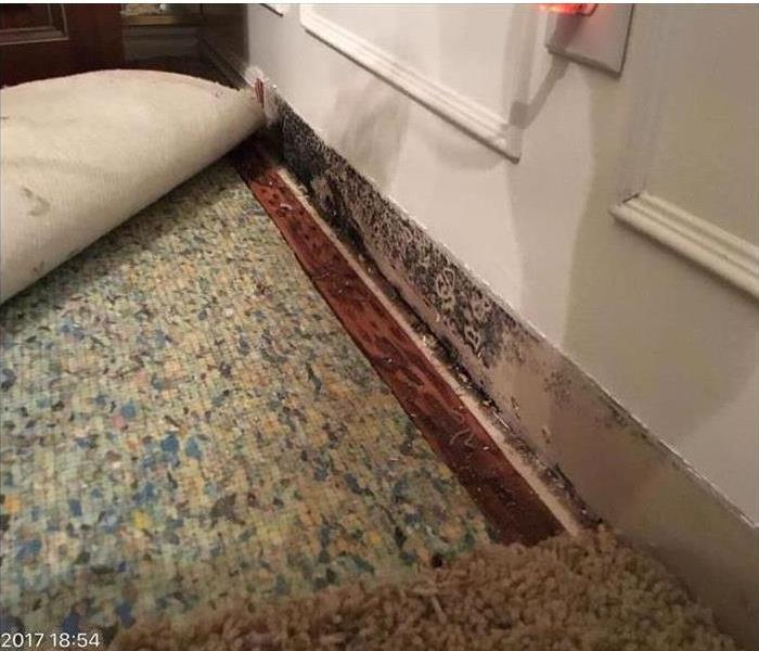 Mold Remediation Mold at your place of Business?