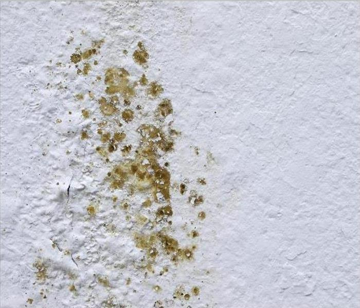 Mold Remediation Fix Mold Problems in any Home with Professional Help