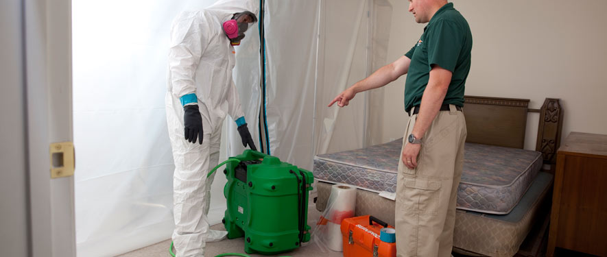 Provo, UT mold removal process